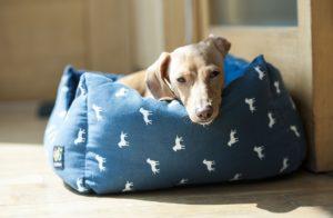 cucce per cani da interno