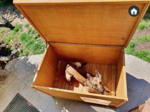 pets imperial norfolk - cuccia per cani con tetto apribile - martin polla