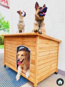 pets imperial norfolk - una cuccia per cani da esterno per tutti - Foto di Martin Polla