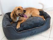 Happilax - Letto per cani lavabile