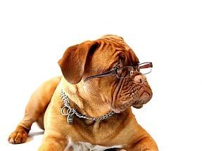 cuccia per cani - migliori cucce per cani