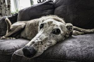 cuccia per cani - cane vecchio