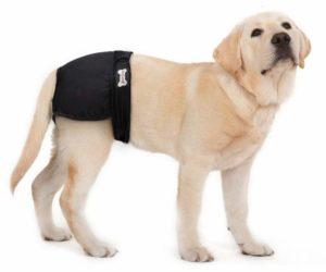 cuccia per cani - mutande per cani cucciolo