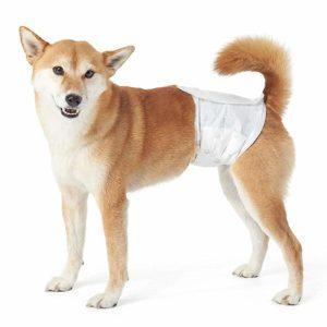 cuccia per cani - pannolino per cane maschio usa e getta