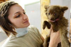 cuccia per cani - veterinario