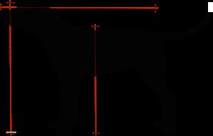 cuccia per cani - quanto deve essere grande la cuccia
