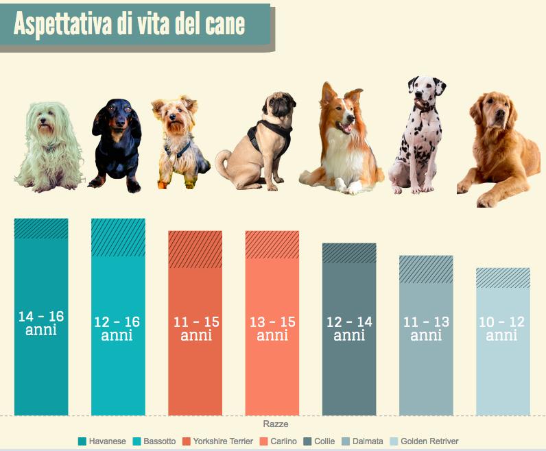 Aspettativa di vita media del cane