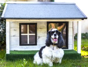 PinoDog™ - Prodotti per Cani